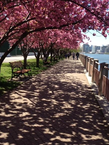 Cherry Blossom Shadows